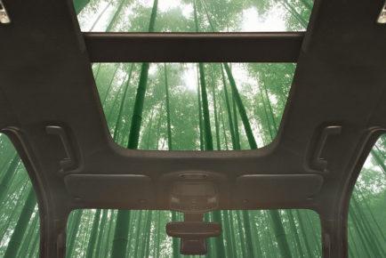 Ford bambus