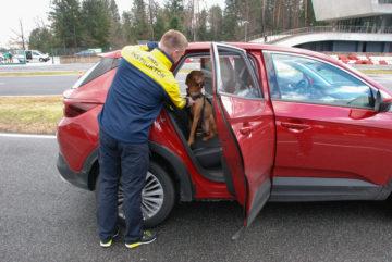 Prevoz psov in varnost AMZS Vransko (12)
